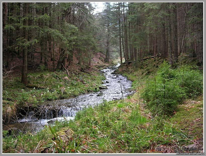 Картинка ліс - місце відпочинку для